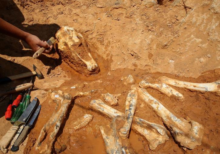 Καμηλοπαρδάλεις και ύαινες σε ανασκαφή στην Αττική (βίντεο)