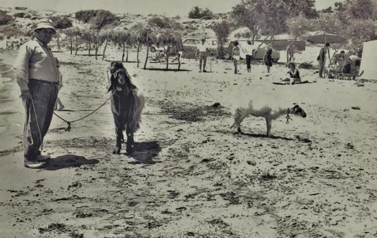 Γεμάτη κατσίκες ήταν κάποτε γνωστή παραλία της Κύπρου – «Παραθέριζαν» δίπλα από τους λουόμενους
