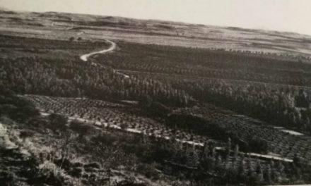 Όταν η Κύπρος γέμισε με «βασιλικούς» ευκάλυπτους για «καλύτερη υγιεινή»
