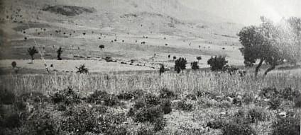 Η συνεισφορά των κυπριακών δασών στους παγκόσμιους πολέμους – Η παράνομη ξυλεία και η μαύρη αγορά των δασών